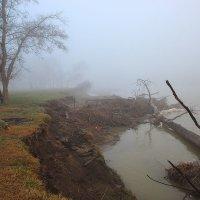 Туманные берега :: Бронислав Богачевский