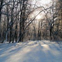 Зимний свет :: Андрей Заломленков