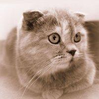 По-разному к кошкам относится племя Людей:... :: Людмила Богданова (Скачко)