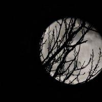 На луне :: Tatiana Kravchenko