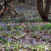 Весна в лесу... :: Сергей Петров