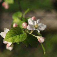 Весна пришла-39. :: Руслан Грицунь