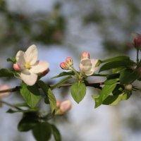 Весна пришла-38. :: Руслан Грицунь