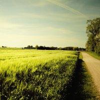 ~ road in field ~ :: ~ Backstage ~ N.