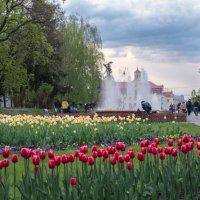 На аллее тюльпанов. :: Андрий Майковский