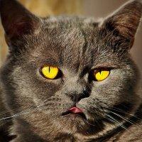 vit5  серия - уличные коты :: Vitaly Faiv