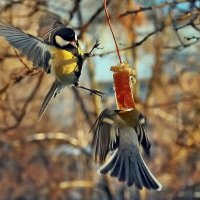 Кстати о птичках... Поберегись... или... Не трогай то,  оно моё...:) :: Александр Резуненко