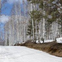 Лыжная трасса. Но снег уже жёсткий, сезон практически окончен. :: Михаил Полыгалов