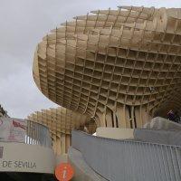 Sevilla mushroom :: Андрей Герасимов