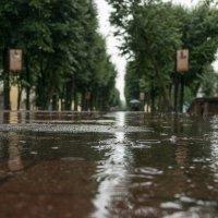 Симфония дождя. :: Олег Козлов