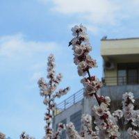 Когда весна :: Наталья (D.Nat@lia) Джикидзе (Берёзина)