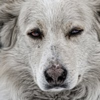 Пёс :: Nn semonov_nn