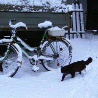 Опять зима...Когда же лето??? :: veilins veilins