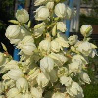 цветы 2 :: Eva Dark13