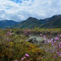 Цветы у реки. :: Валерий Медведев