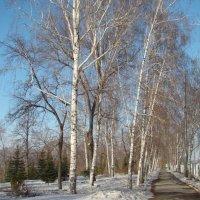 Березовая аллея в парке :: марина ковшова