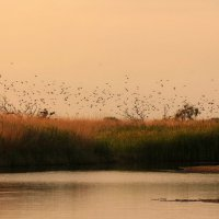 Птичий остров. :: Евгеша Сафронова