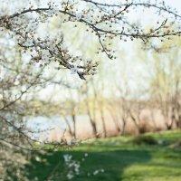 Просится весна :: Вячеслав Чик