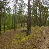 Хорошо гулять по лесу :: Serega