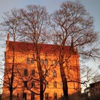 Вечернее солнце :: Tanja Gerster