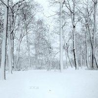 метель пролетела :: Miko Baltiyskiy