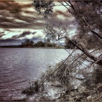 Сломанная ветка :: Ирина Falcone