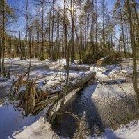 Морозное весеннее утро :: Алексей Строганов