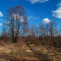 Подмосковный март 3 :: Андрей Дворников