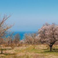 Весна :: Nyusha