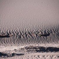 Пустыня Атакама :: Tatiana Belyatskaya