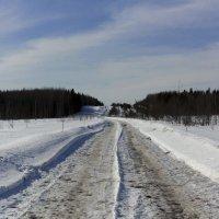 Дорога на нефтепровод :: Андрей Мартюшев