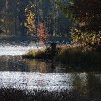 золотая осень и синие птицы :: sv.kaschuk