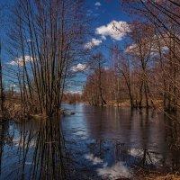 Весна наступает 3 :: Андрей Дворников