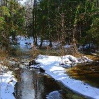 Весенние воды.. :: Алла Кочергина
