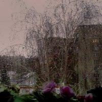 За окошком дождь и ветер , а у нас цветы цветут ! :: Мила Бовкун