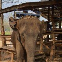 Слон :: Елена