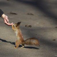Орехи есть? :: Svetlana