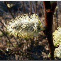 весна... :: ВладиМер