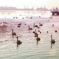 Утро лебединого озера.. :: Вахтанг Хантадзе