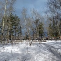 Весна 31 марта. :: Мила Бовкун