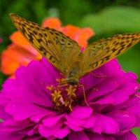 Бабочка :: Александр Демиденко