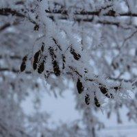 зима :: Влад