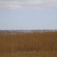 Вид на город со стороны залива :: Маргарита Батырева