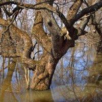 Не удивляются столетние деревья... :: Лесо-Вед (Баранов)