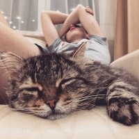 Возвращение блудного кота :: Ольга Токмакова