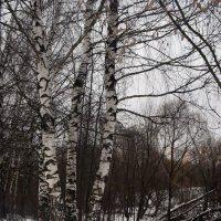 зимняя картинка :: Галина R...
