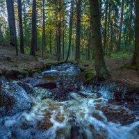 Лесной ручей после ночного заморозка. :: Фёдор. Лашков