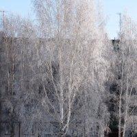 Белая береза под моим окном принакрылась снегом словно серебром :: Наталья Петровна Власова
