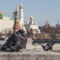 Городской житель :: Elena Ignatova