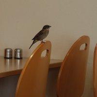 Посетитель кафе :: Natalia Harries